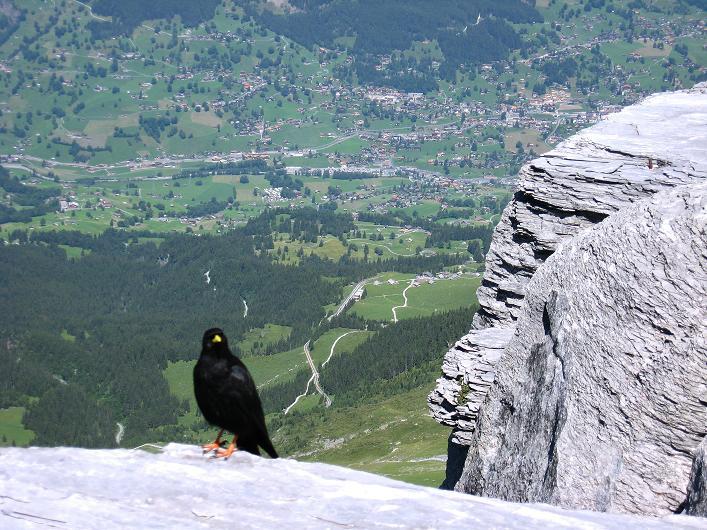 Foto: Andreas Koller / Klettersteig Tour / Klettersteig Rotstock (2663 m) / Blick auf Grindelwald / 05.09.2009 02:09:39