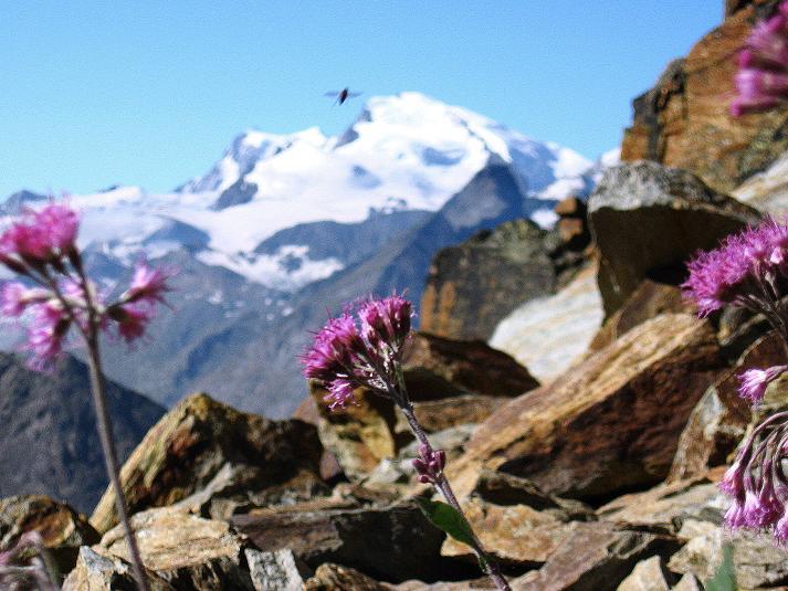 Foto: Andreas Koller / Wander Tour / Lagginhorn (4010 m) / 12.09.2009 15:33:42