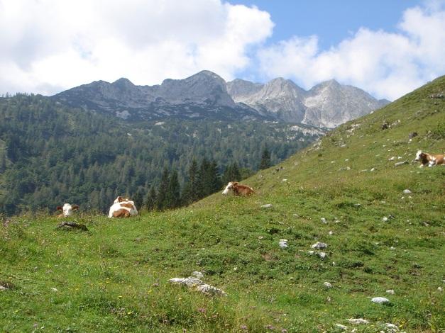Foto: Manfred Karl / Wander Tour / Von Quehenberg auf den Schober / 31.08.2009 21:23:16
