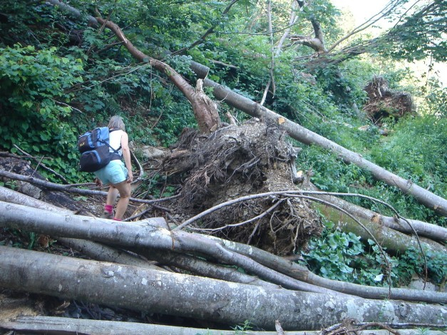 Foto: Manfred Karl / Wander Tour / Von Quehenberg auf den Schober / Hindernisse am Weg / 31.08.2009 21:15:10