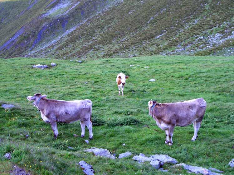 Foto: vince 51 / Wander Tour / Kreuzjochkogel-Überschreitung / 07.09.2009 23:02:07