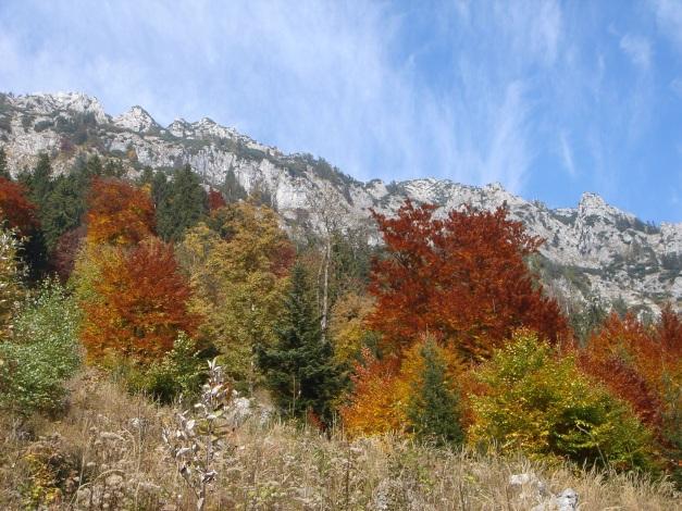 Foto: Manfred Karl / Wander Tour / Goldtropf Steig am Hochstaufen / Im Herbst ist die Goldtropfwand wohl am schönsten / 17.09.2009 21:18:23