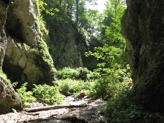 Foto: AbsolutAlpin.at / Wander Tour / Schneeberg - Rax - Überschreitung in 2 Tagen / Weichtalklamm / 29.09.2009 11:46:38