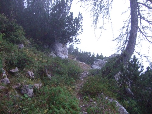 Foto: hofchri / Wander Tour / Hoher Göll (2522 m) - Runde Mannlsteig (B/C) und Schustersteig (A/B) / Aufstieg über den unmarkierten Postensteig / 01.10.2009 20:41:49
