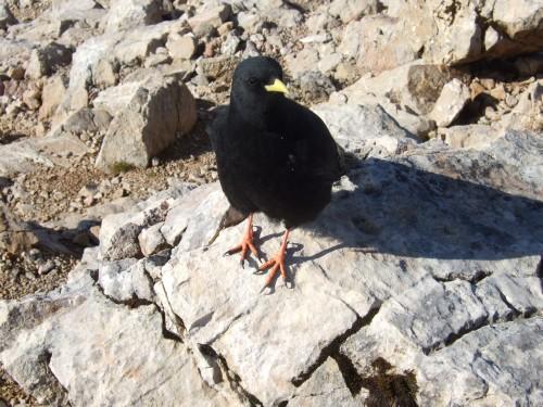 Foto: hofchri / Wander Tour / Hoher Göll (2522 m) - Runde Mannlsteig (B/C) und Schustersteig (A/B) / frecher Schnorrer / 01.10.2009 20:51:04