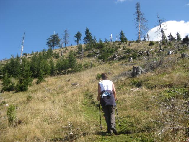 Foto: Wolfgang Lauschensky / Wander Tour / Schwarzerberg-Runde von Unterscheffau / die wenigen waldfreien Meter vor dem Gipfel / 09.10.2009 18:32:39