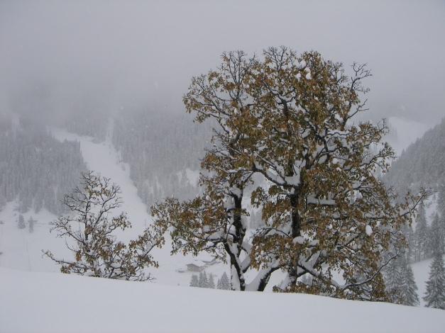 Foto: Manfred Karl / Ski Tour / Von Zauchensee auf den Roßkopf / Wintereinbruch Mitte Oktober / 03.11.2009 20:05:59