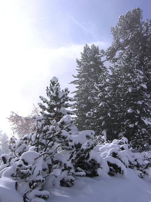 Foto: Andreas Koller / Ski Tour / Durchs Plattenkar auf die Plattenspitze (2294 m) / 08.11.2009 20:13:15