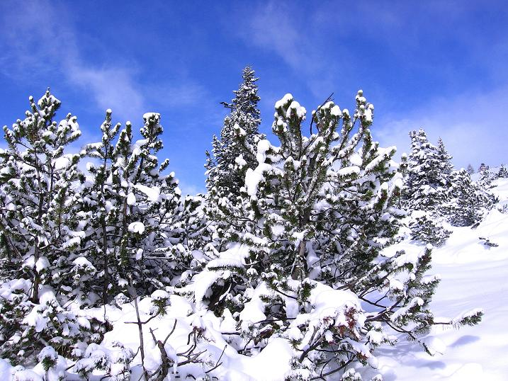 Foto: Andreas Koller / Ski Tour / Durchs Plattenkar auf die Plattenspitze (2294 m) / 08.11.2009 20:13:02