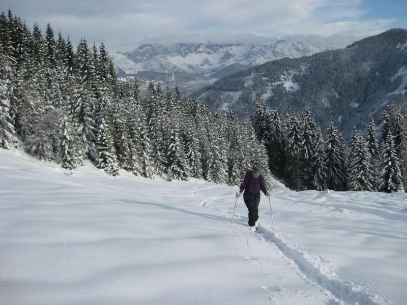 Foto: Wolfgang Lauschensky / Ski Tour / Vorderes Labeneck  / schöne Waldschneisen / 10.11.2009 01:38:48