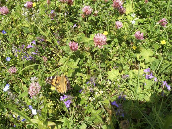 Foto: Datzi / Wander Tour / Bergtour auf die Hocheisspitze (Biwak) / Die Blumenwiese auf der Hocheisalm / 21.11.2009 18:35:27