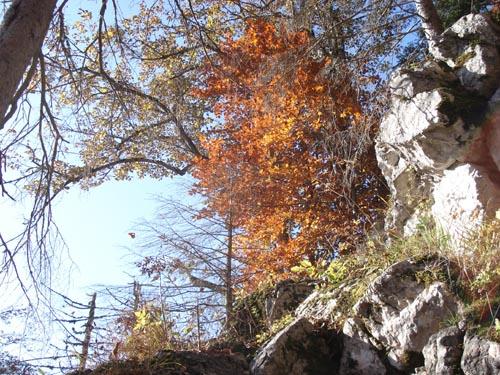 Foto: Jochenruhpolding_Aufnberg / Wander Tour / Hochfelln von Ruhpolding über Strohschneid / 28.11.2009 09:18:15