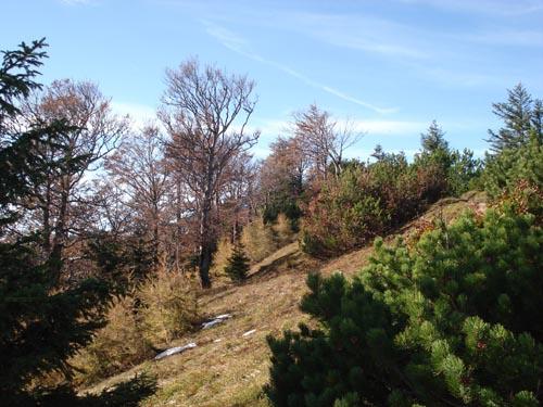 Foto: Jochenruhpolding_Aufnberg / Wander Tour / Hochfelln von Ruhpolding über Strohschneid / 28.11.2009 09:19:02