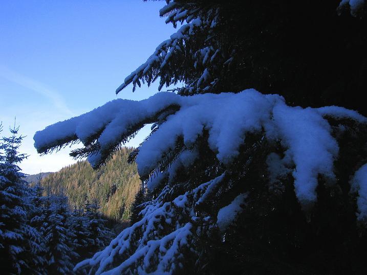 Foto: Andreas Koller / Wander Tour / Aus der Zidritz auf die Kahlwandspitze (2090 m) / 06.12.2009 23:04:44