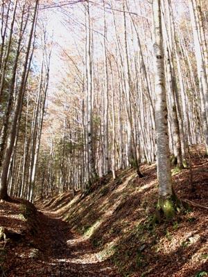 Foto: JochenRuhpolding / Wander Tour / Auf dem Jägersteig zum Hörndlwandgipfel / 06.12.2009 19:06:24