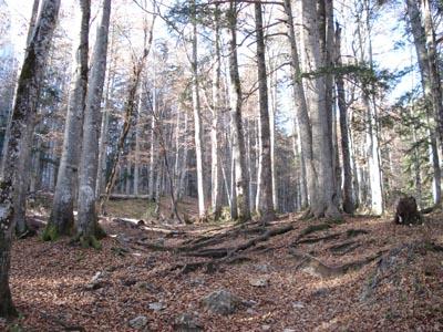 Foto: JochenRuhpolding / Wander Tour / Auf dem Jägersteig zum Hörndlwandgipfel / 06.12.2009 19:06:51
