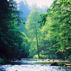Foto: Ferienregion Böhmerwald / Wander Tour / Michlweg / 07.12.2009 11:56:26