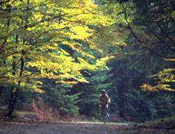 Foto: Ferienregion Böhmerwald / Wander Tour / Hochfichtrunde / 10.12.2009 09:57:46