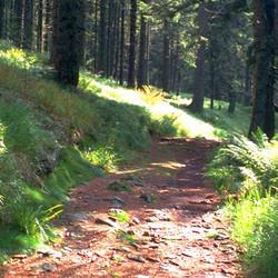 Foto: Ferienregion Böhmerwald / Wander Tour / Hochfichtrunde / 10.12.2009 09:57:54