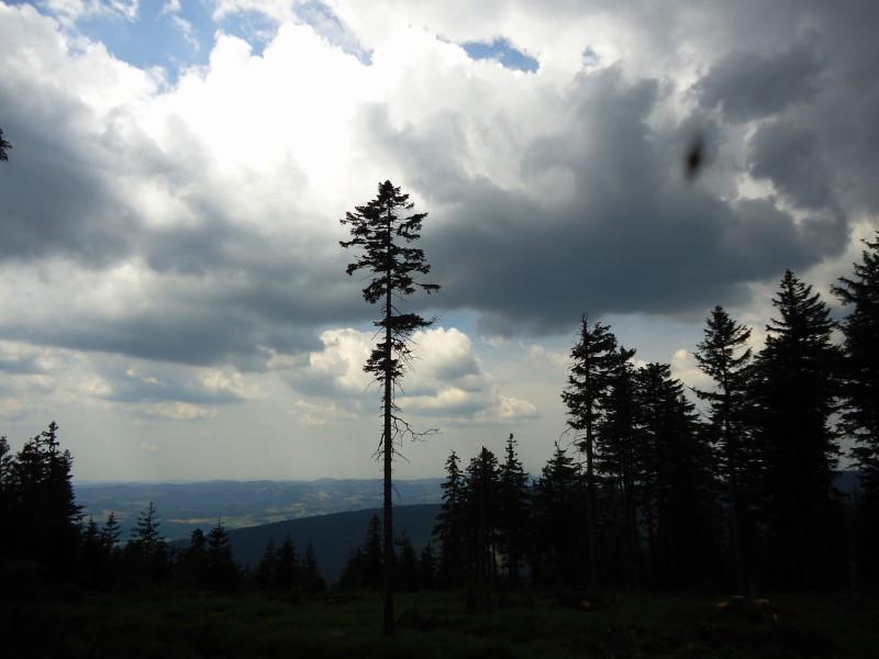 Foto: Günter Siegl / Wander Tour / Gipfel-Ge(h)nussweg / 04.07.2017 21:39:25