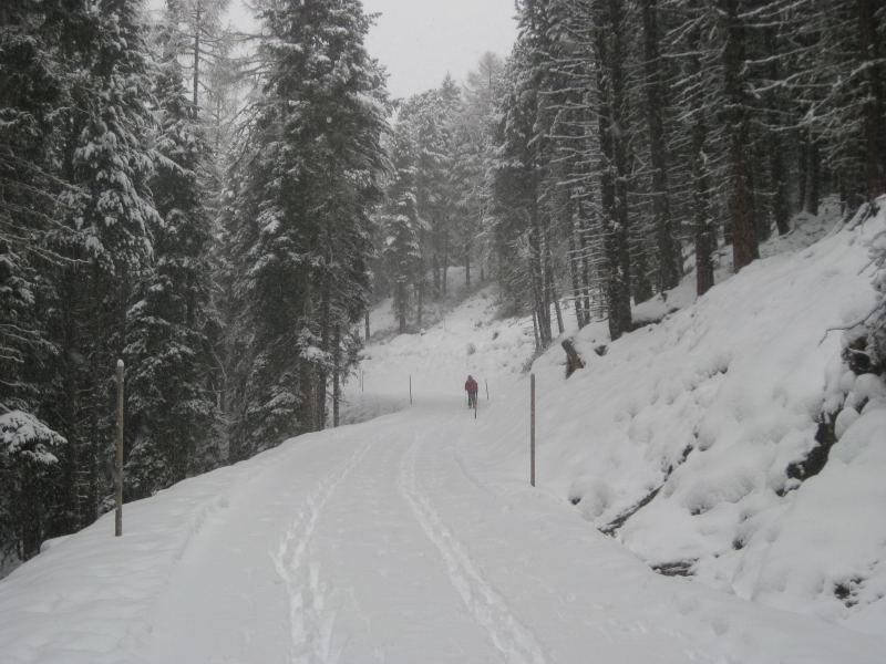 Foto: Wolfgang Lauschensky / Ski Tour / Faltegartenköpfl 2184m / Rodelbahn? / 10.12.2009 22:10:46
