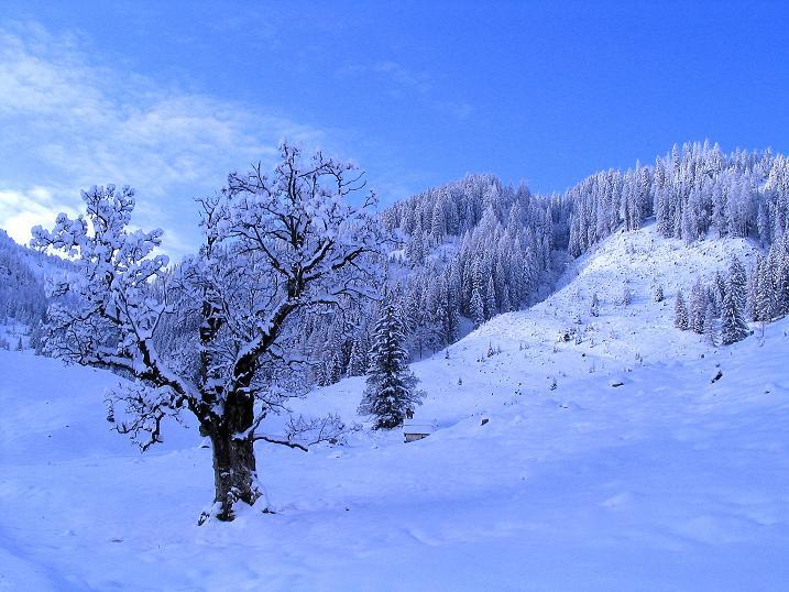 Foto: Andreas Koller / Ski Tour / Direkter Anstieg auf den Hengst (2076 m) / 15.12.2009 21:09:17