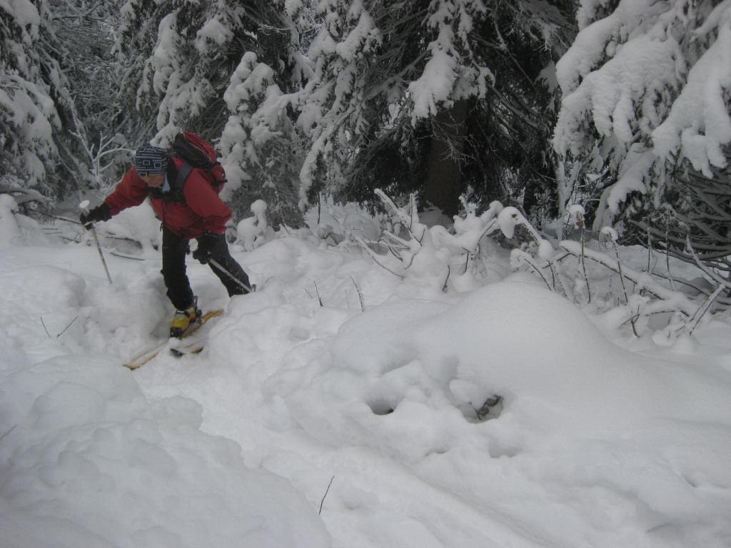 Foto: Wolfgang Lauschensky / Ski Tour / Pfaffenkegel 1837m, Torrenerjoch / im etwas unangenehmen steilen Waldwurfgebiet am Südrücken des Jenners / 16.12.2009 18:49:35