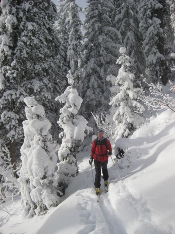 Foto: Wolfgang Lauschensky / Ski Tour / Pfaffenkegel 1837m, Torrenerjoch / der dichte Wald lichtet sich / 16.12.2009 18:49:21