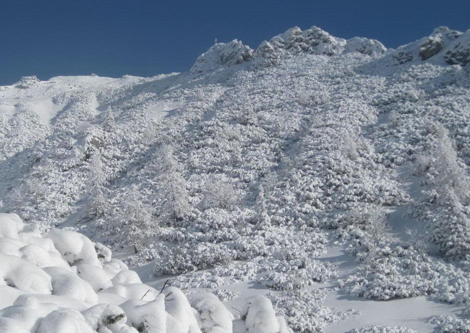 Foto: Wolfgang Lauschensky / Ski Tour / Pfaffenkegel 1837m, Torrenerjoch / Pfaffenkegel von Südwest / 16.12.2009 18:48:29