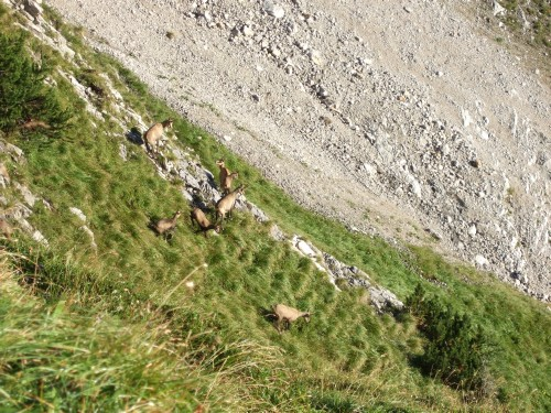 Foto: hofchri / Mountainbike Tour / Rund um das Sonnjoch über Lamsen- (1953 m) und Plumsjoch (1664 m) / Hurra die Gams / 01.01.2010 12:06:10