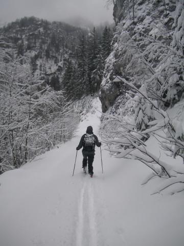 Foto: Wolfgang Lauschensky / Ski Tour / Streicher oder Inzeller Kienberg / endlos langer flacher Forstweg / 31.12.2009 20:32:34