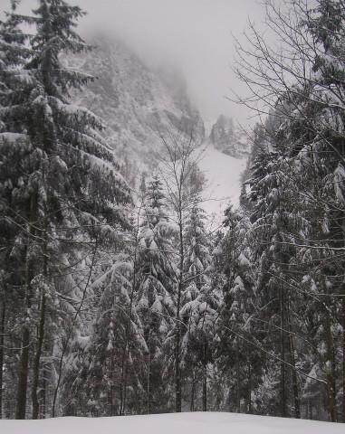 Foto: Wolfgang Lauschensky / Ski Tour / Streicher oder Inzeller Kienberg / Der Streicher bietet sich an, wenn die Roßgasse zu lawinengefährlich ist / 31.12.2009 20:32:17