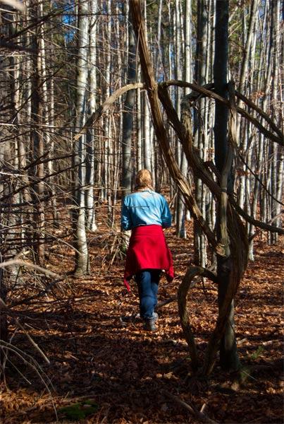 Foto: schrutkaBua / Wander Tour / Eibling 1.108m / Wanderung im Wald / 05.01.2010 16:10:08