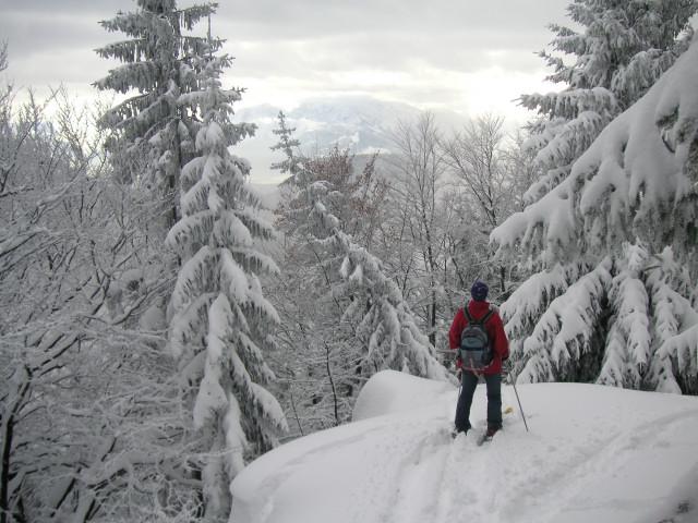 Foto: Wolfgang Lauschensky / Ski Tour / Gurlspitze 1158m / Abfahrt entlang des Südwestgrates (angeblich durch Windwurf nun stark verändert) / 08.01.2010 14:39:00