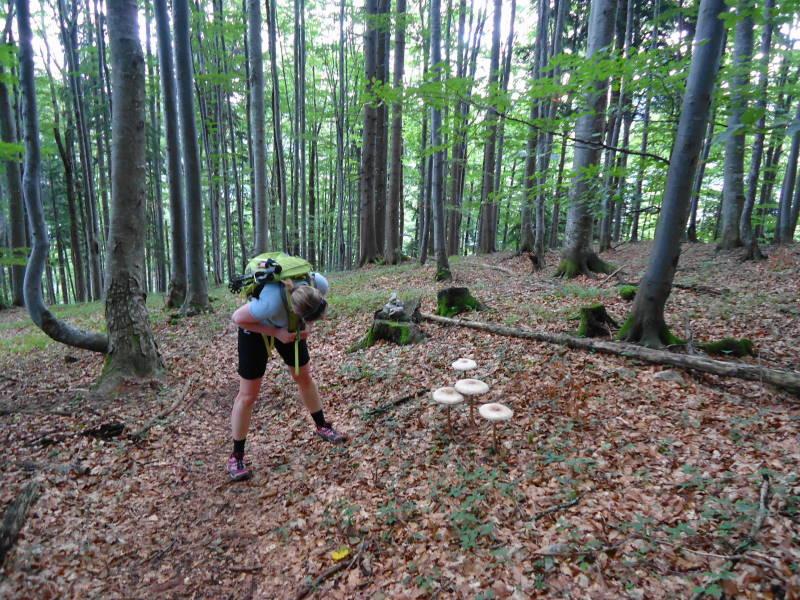 Foto: Günter Siegl / Wander Tour / Ost - Westüberschreitung Fahrnaugupf / 20.08.2014 13:53:43