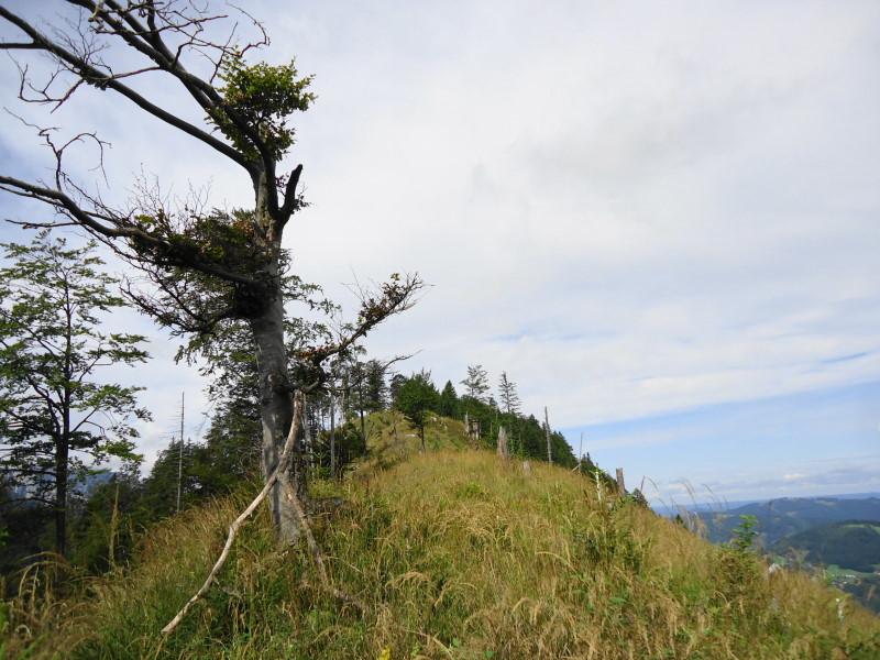 Foto: Günter Siegl / Wander Tour / Ost - Westüberschreitung Fahrnaugupf / Ostkamm Fahrnaugupf / 20.08.2014 13:53:29