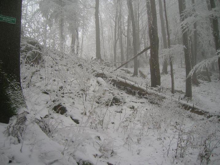 Foto: kleopatra / Wander Tour / Ost - Westüberschreitung Fahrnaugupf / Aufstieg zum Geißstein / 08.01.2010 23:34:04
