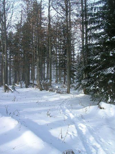 Foto: kleopatra / Wander Tour / Ost - Westüberschreitung Fahrnaugupf / Abstieg / 08.01.2010 23:34:49