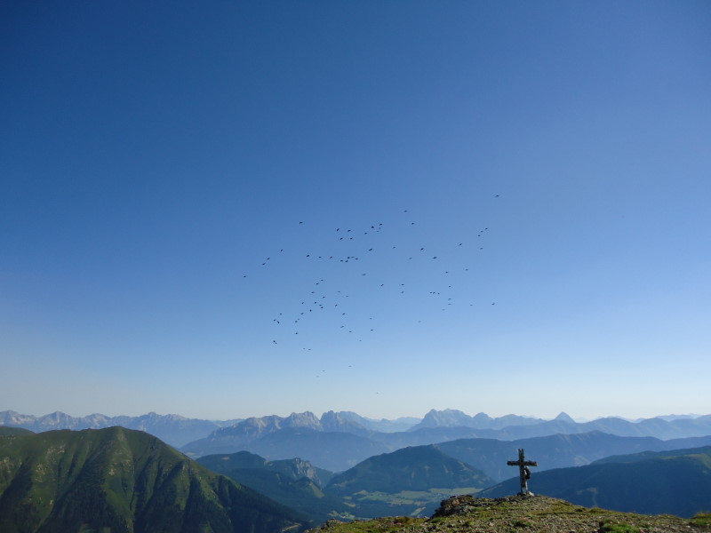 Foto: Günter Siegl / Wandertour / Bruderkogel - Massiger Aussichtsberg über der Pölsen / 04.08.2013 14:28:44