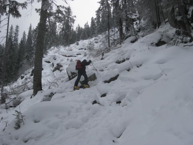 Foto: Wolfgang Lauschensky / Ski Tour / Gressenstein 2216m / enger steiler Waldaufstieg / 10.01.2010 12:24:46