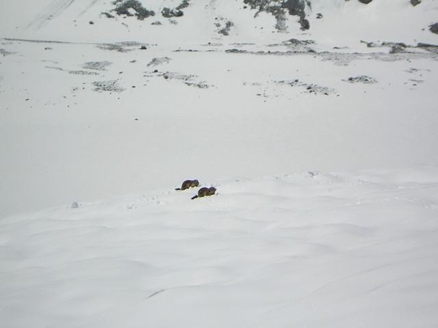 Foto: Wolfgang Lauschensky / Skitour / Johannisberg (3453m) und Hohe Riffl (3338m) / zwei Tourenbegleiter / 28.03.2010 17:29:42
