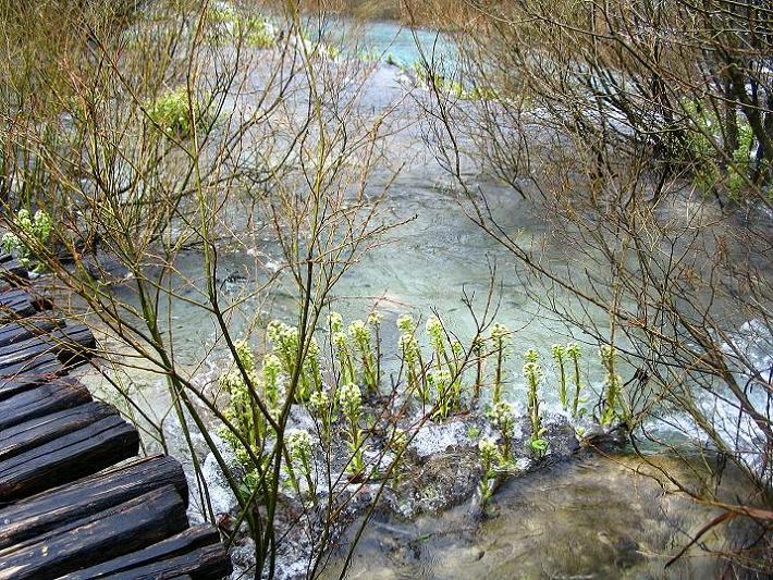 Foto: Andreas Koller / Wandertour / Naturschauspiel Plitvicer Seen (560 m) / 09.04.2010 22:30:10