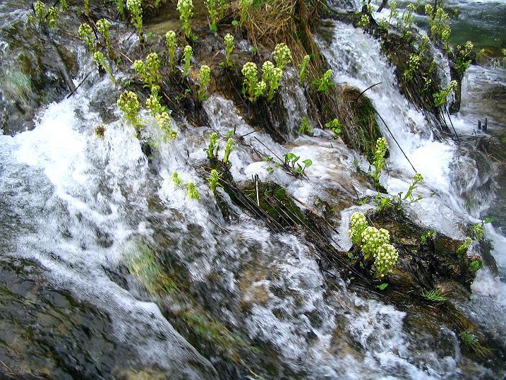 Foto: Andreas Koller / Wandertour / Naturschauspiel Plitvicer Seen (560 m) / 09.04.2010 22:29:10
