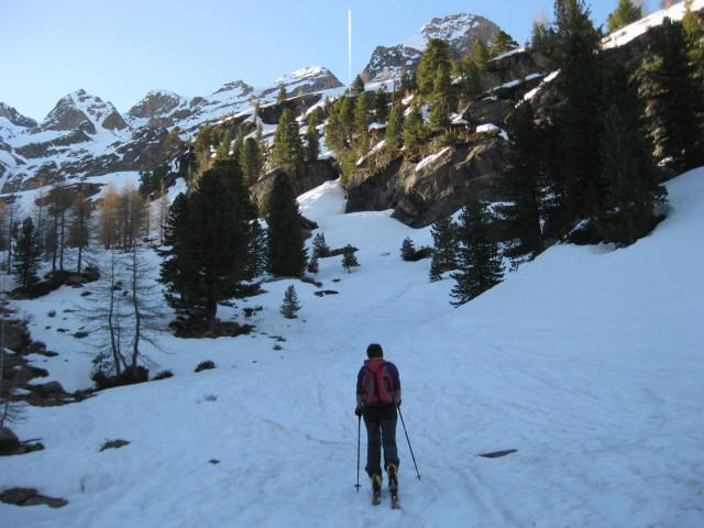 Foto: Wolfgang Lauschensky / Skitour / Östliche Veneziaspitze (3356m) - oder III. Veneziaspitze / Anstieg zu den Felsen im ´schütteren Wald / 27.05.2010 15:56:41