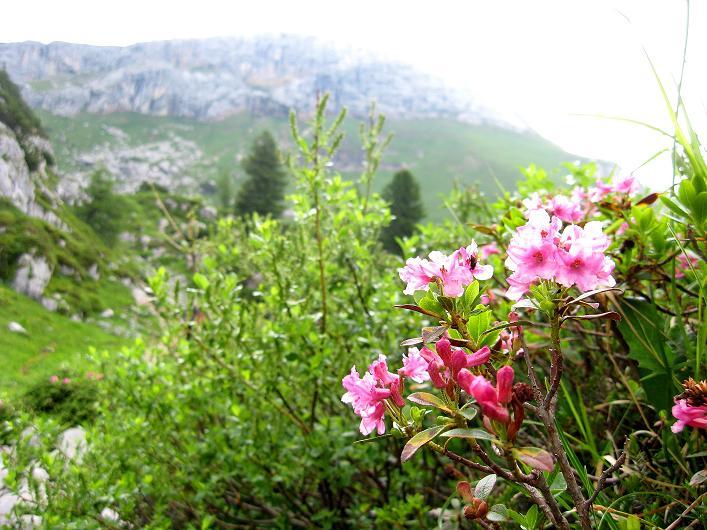Foto: Andreas Koller / Klettersteigtour / Rosskopf Klettersteig und Rofanspitze (2259 m) / 14.07.2010 15:04:10