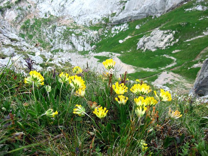 Foto: Andreas Koller / Klettersteigtour / Rosskopf Klettersteig und Rofanspitze (2259 m) / 14.07.2010 14:58:56
