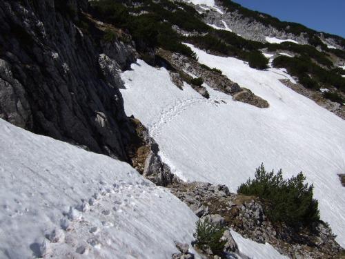 Foto: hofchri / Wandertour / Überschreitung Höllengebirge über Hochleckenhaus (1.574 m) / Schneestampfen zur Rieder Hütte / 30.06.2010 19:32:30