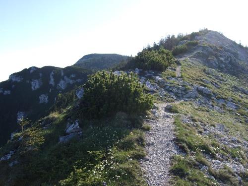 Foto: hofchri / Wandertour / Überschreitung Höllengebirge über Hochleckenhaus (1.574 m) / schöner Wanderweg / 30.06.2010 19:26:35