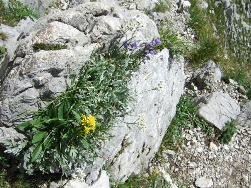 """Foto: hofchri / Klettersteigtour / Ellmauer Halt (2.344 m) über """"Gamsängersteig"""" / da wächst noch was / 12.08.2010 20:30:07"""
