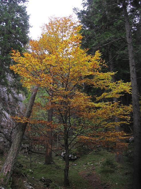 Foto: Andreas Koller / Klettersteigtour / Auf dem Naturfreundesteig durch die Kleine Klause (1002m) / 17.10.2010 17:46:05